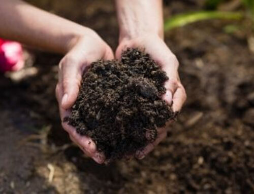От какво да си направим тор за саксийните растения?