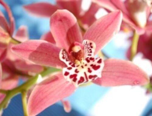 Как да се грижим за различните видове орхидеи?