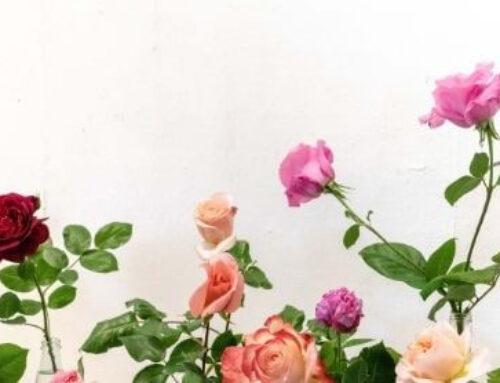 Мини рози в контейнер, как се отглеждат?
